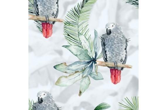Summer parrots 2