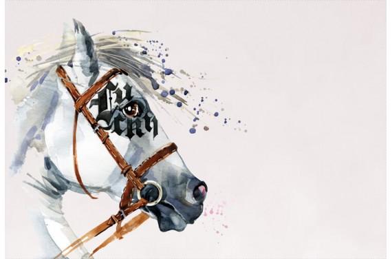 Dressage horse BOY