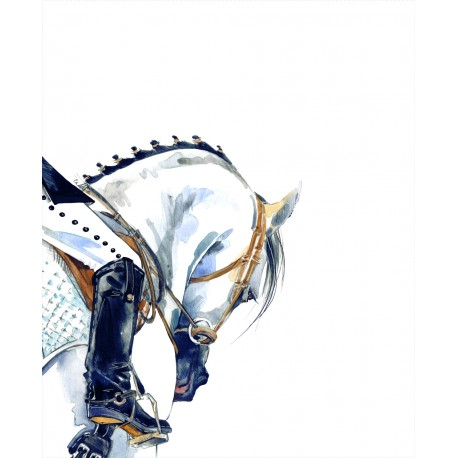 Dressage Horse 2