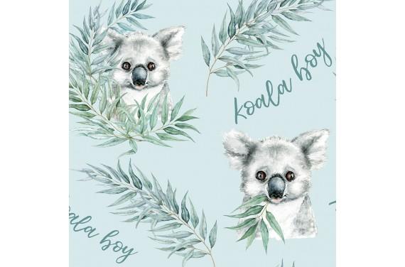 Koala 1 boy