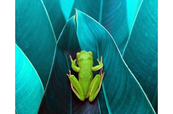 Panel na torbę - żaba - 50x40 cm