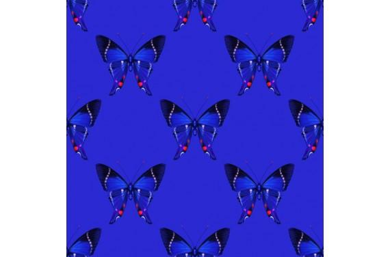 Summer butterflies 3