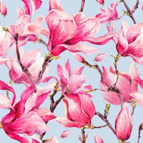 Blooming magnolia 1