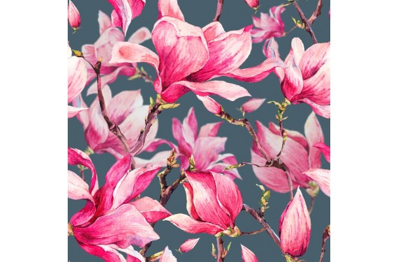 Blooming magnolia 4
